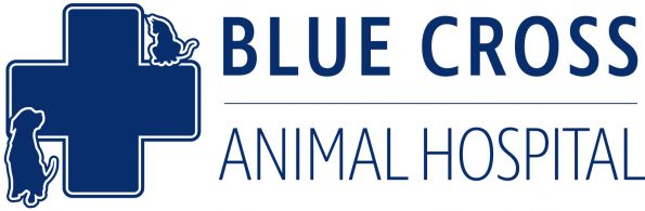 Blue Cross Animal Hospital in Hamilton, ON