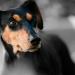 Thumbnail for Pet Cancer Awareness Month
