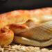 Thumbnail for World Snake Day!
